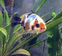 JEM Fish