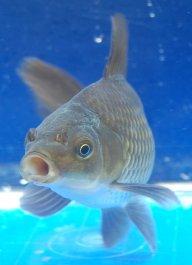 Fishheadz